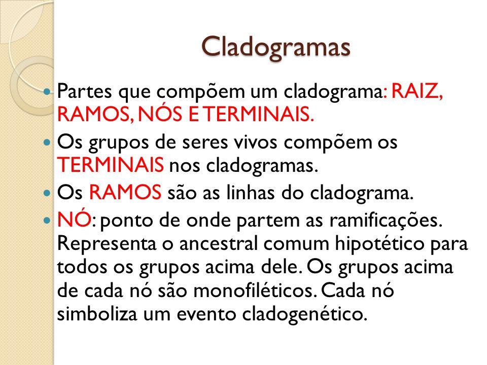 Cladogramas Partes que compõem um cladograma: RAIZ, RAMOS, NÓS E TERMINAIS. Os grupos de seres vivos compõem os TERMINAIS nos cladogramas. Os RAMOS sã