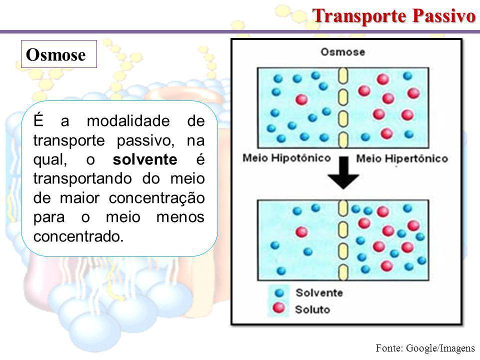 Transporte Passivo Osmose É a modalidade de transporte passivo, na qual, o solvente é transportando do meio de maior concentração para o meio menos concentrado.