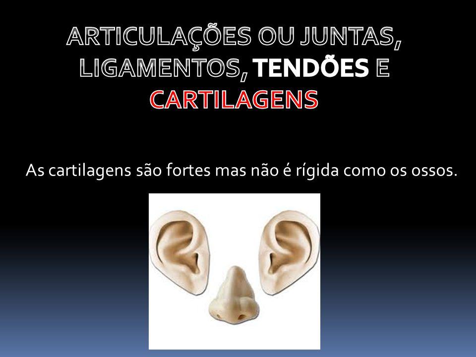 As cartilagens são fortes mas não é rígida como os ossos.