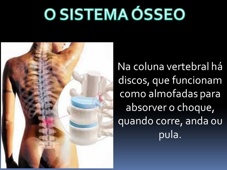 Na coluna vertebral há discos, que funcionam como almofadas para absorver o choque, quando corre, anda ou pula.
