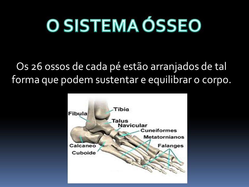 Os 26 ossos de cada pé estão arranjados de tal forma que podem sustentar e equilibrar o corpo.