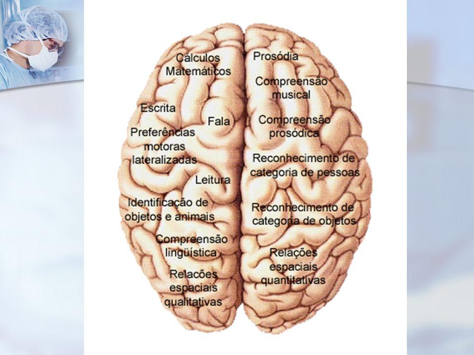 continuação CÉREBRO: Hemisférios- divisões (frontal- parietal- temporal- occiptal)- CÓRTEX (parte mais externa) corpos de neurônios (substância cinzen
