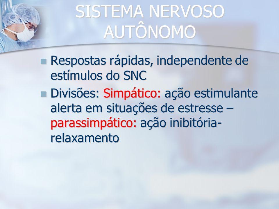 SISTEMA NERVOSO PERIFÉRICO Nervos e gânglios Nervos e gânglios FUNÇÃO: Conexão com o SNC FUNÇÃO: Conexão com o SNC Nervos sensitivos (aferentes), moto
