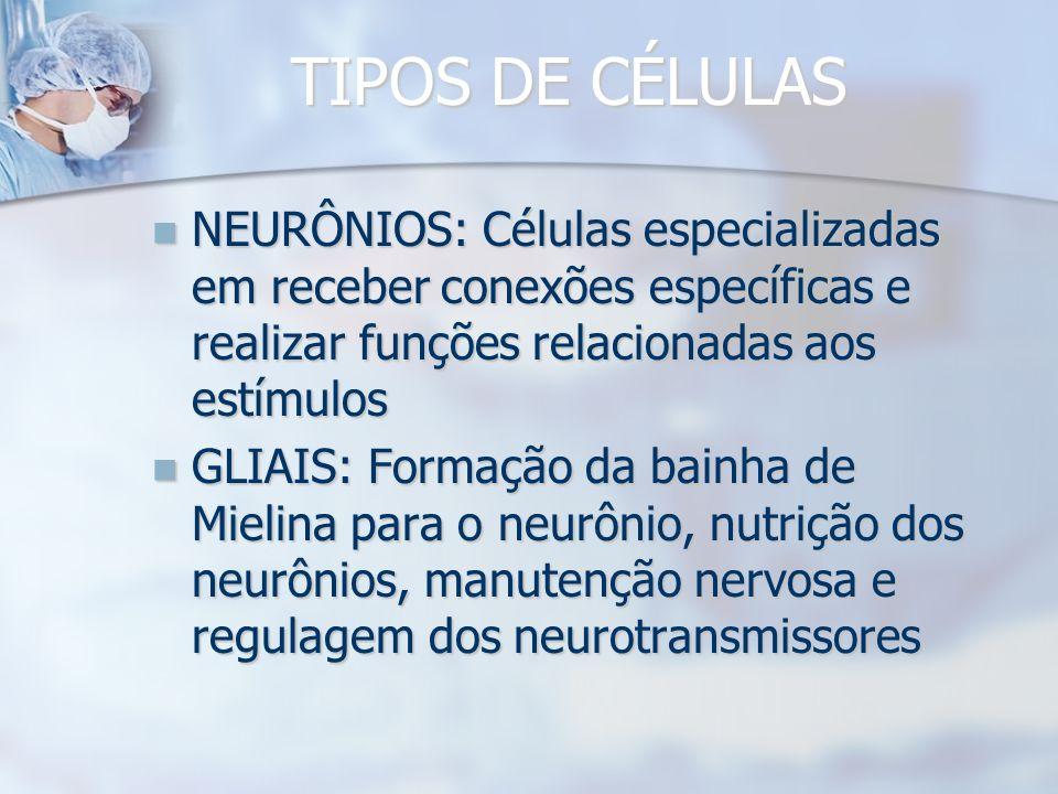 TIPOS DE CÉLULAS NEURÔNIOS: Células especializadas em receber conexões específicas e realizar funções relacionadas aos estímulos NEURÔNIOS: Células especializadas em receber conexões específicas e realizar funções relacionadas aos estímulos GLIAIS: Formação da bainha de Mielina para o neurônio, nutrição dos neurônios, manutenção nervosa e regulagem dos neurotransmissores GLIAIS: Formação da bainha de Mielina para o neurônio, nutrição dos neurônios, manutenção nervosa e regulagem dos neurotransmissores