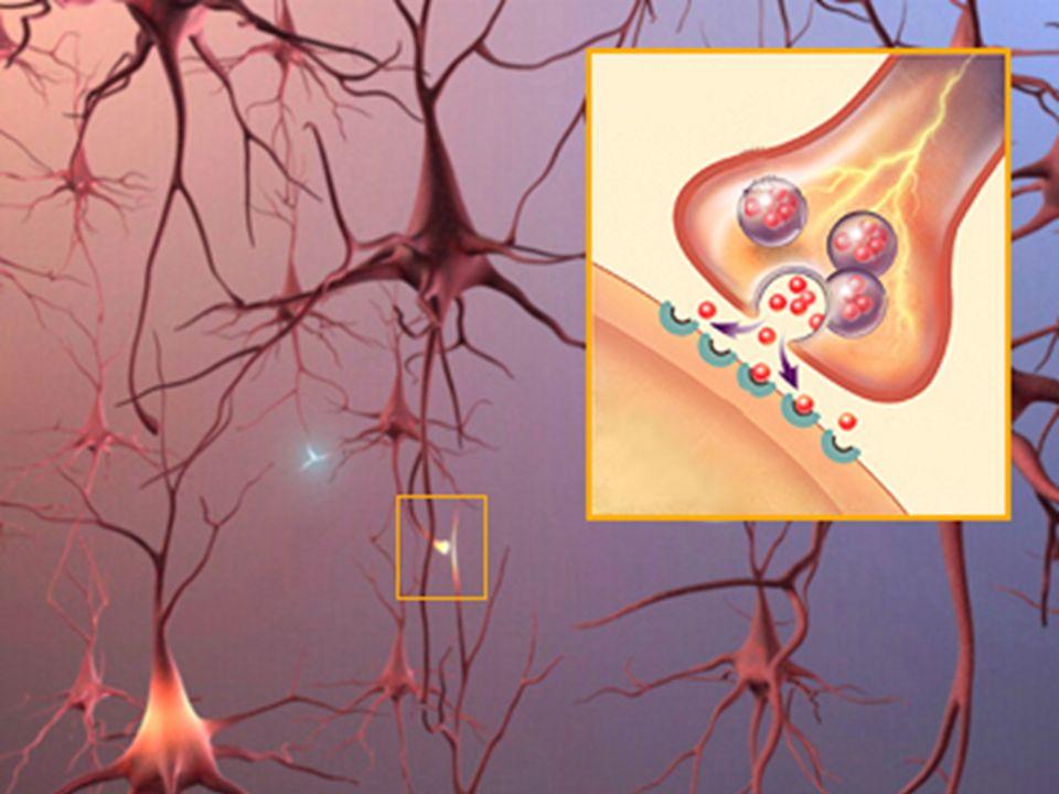 CEREBELO: Divisão em hemisférios- córtex (substância cinzenta) - Funções: movimentos voluntários- equilíbrio- postura- coordenação sensorial- memória de curto prazo- atenção CEREBELO: Divisão em hemisférios- córtex (substância cinzenta) - Funções: movimentos voluntários- equilíbrio- postura- coordenação sensorial- memória de curto prazo- atenção PONTE: Atos reflexos (tosse- vômito- piscar de olhos)- respiração- batimentos cardíacos PONTE: Atos reflexos (tosse- vômito- piscar de olhos)- respiração- batimentos cardíacos SISTEMA NERVOSO CENTRAL