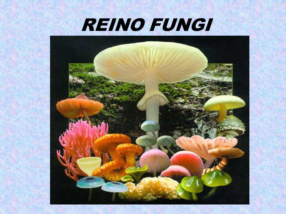 3) Predadores Micrografias eletrônicas de um nematódeo capturado pelo fungo predador Arthrobotrys oligospora.