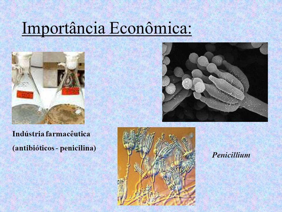 Importância Econômica: Indústria farmacêutica (antibióticos - penicilina) Penicillium