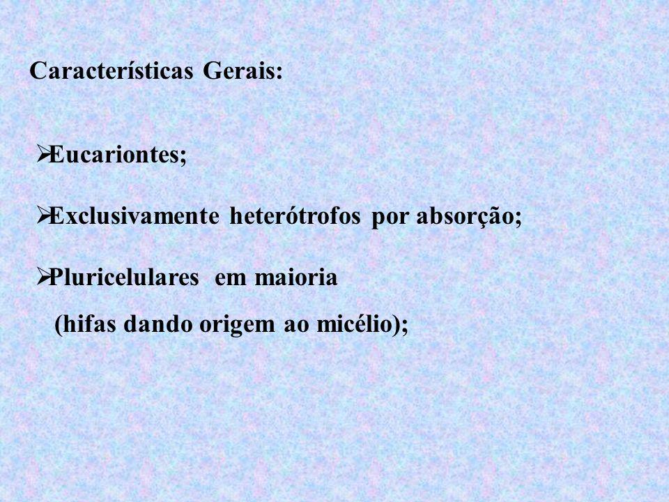 Características Gerais: Eucariontes; Pluricelulares em maioria (hifas dando origem ao micélio); Exclusivamente heterótrofos por absorção;