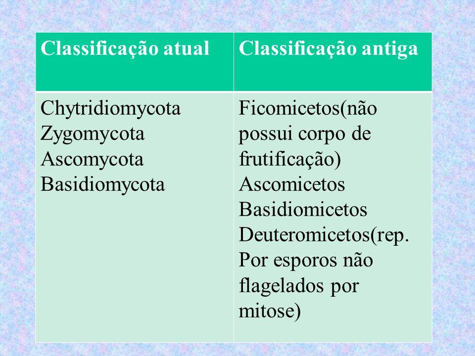 Classificação atualClassificação antiga Chytridiomycota Zygomycota Ascomycota Basidiomycota Ficomicetos(não possui corpo de frutificação) Ascomicetos