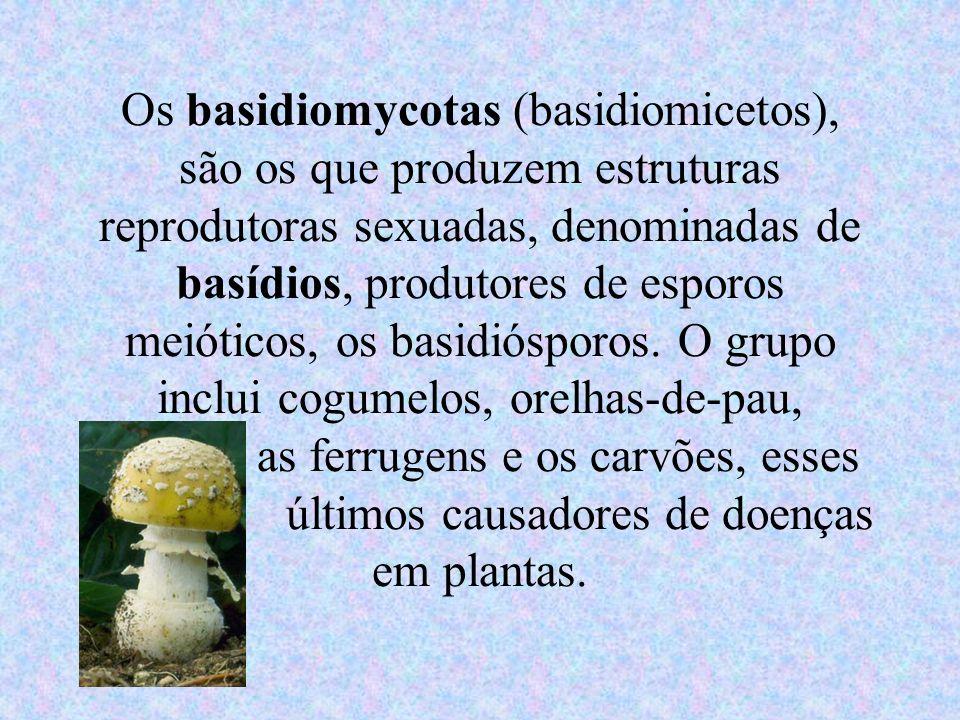 Os basidiomycotas (basidiomicetos), são os que produzem estruturas reprodutoras sexuadas, denominadas de basídios, produtores de esporos meióticos, os