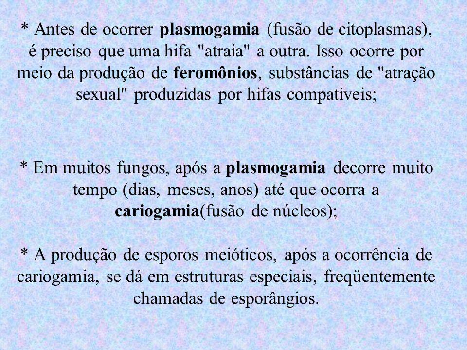 * Antes de ocorrer plasmogamia (fusão de citoplasmas), é preciso que uma hifa