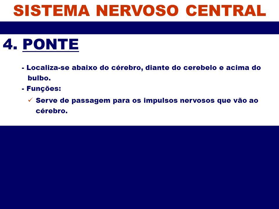 SISTEMA NERVOSO CENTRAL 4. PONTE - Localiza-se abaixo do cérebro, diante do cerebelo e acima do bulbo. - Funções: Serve de passagem para os impulsos n