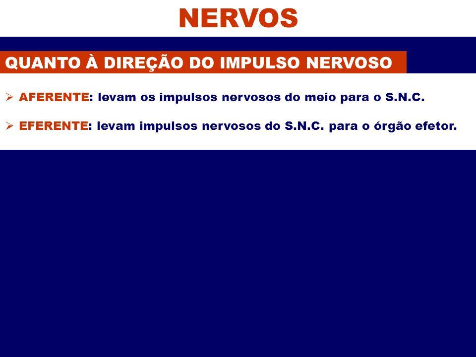 NERVOS QUANTO À DIREÇÃO DO IMPULSO NERVOSO AFERENTE: levam os impulsos nervosos do meio para o S.N.C. EFERENTE: levam impulsos nervosos do S.N.C. para