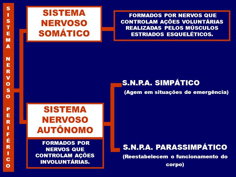 S.N.P.A. PARASSIMPÁTICO (Reestabelecem o funcionamento do corpo) S.N.P.A. SIMPÁTICO (Agem em situações de emergência) FORMADOS POR NERVOS QUE CONTROLA
