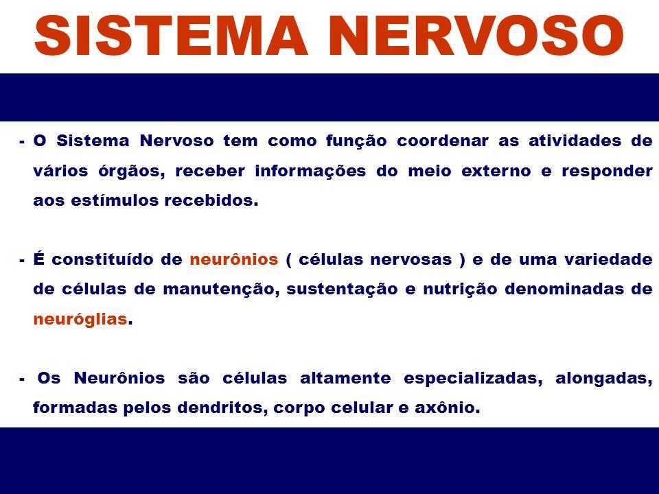 SISTEMA NERVOSO -O Sistema Nervoso tem como função coordenar as atividades de vários órgãos, receber informações do meio externo e responder aos estím