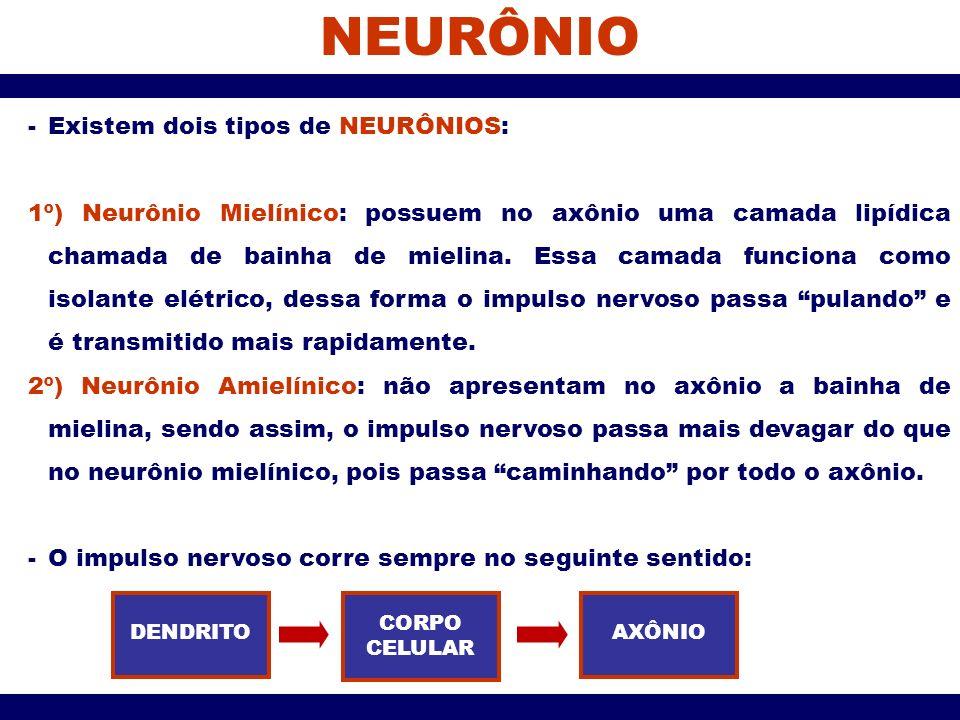 NEURÔNIO -Existem dois tipos de NEURÔNIOS: 1º) Neurônio Mielínico: possuem no axônio uma camada lipídica chamada de bainha de mielina. Essa camada fun