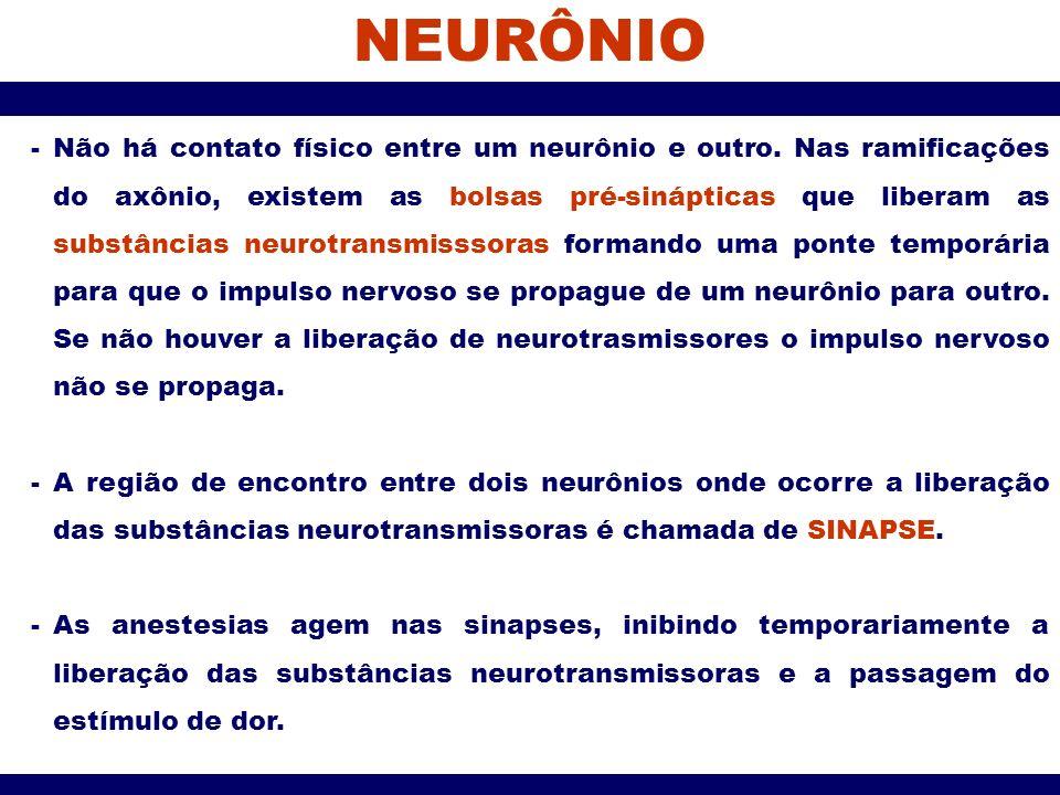 NEURÔNIO -Não há contato físico entre um neurônio e outro. Nas ramificações do axônio, existem as bolsas pré-sinápticas que liberam as substâncias neu