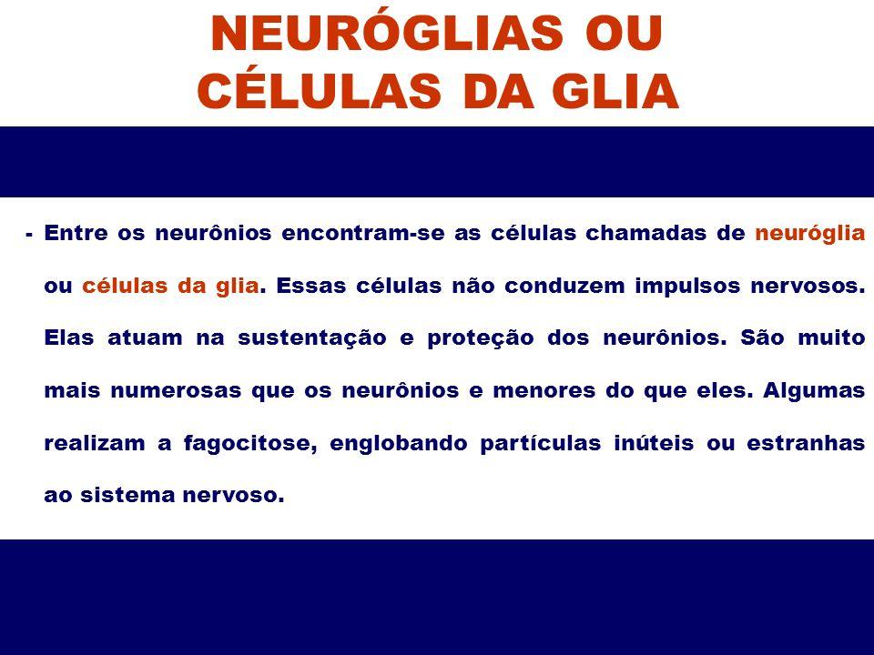 NEURÓGLIAS OU CÉLULAS DA GLIA -Entre os neurônios encontram-se as células chamadas de neuróglia ou células da glia. Essas células não conduzem impulso