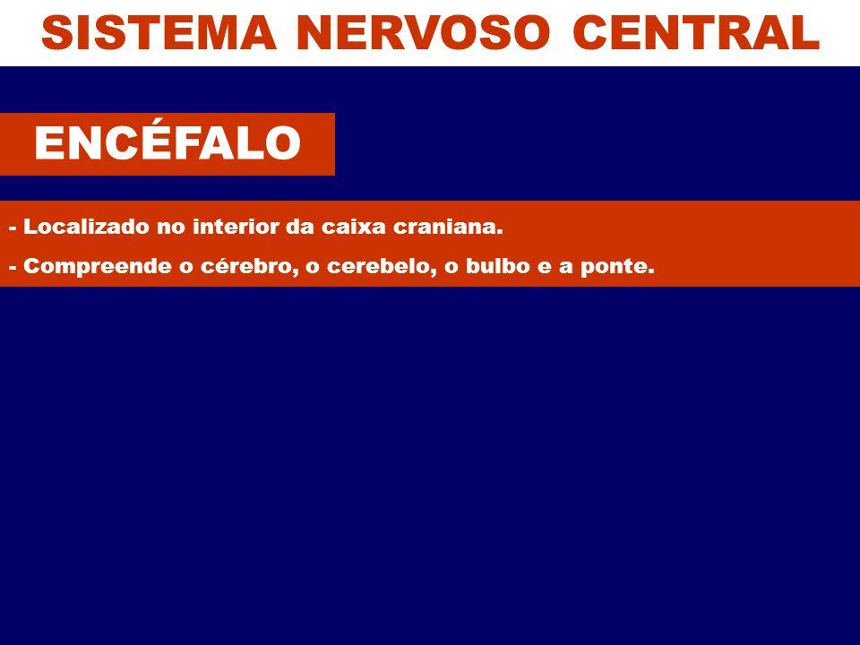 SISTEMA NERVOSO CENTRAL ENCÉFALO - Localizado no interior da caixa craniana. - Compreende o cérebro, o cerebelo, o bulbo e a ponte.