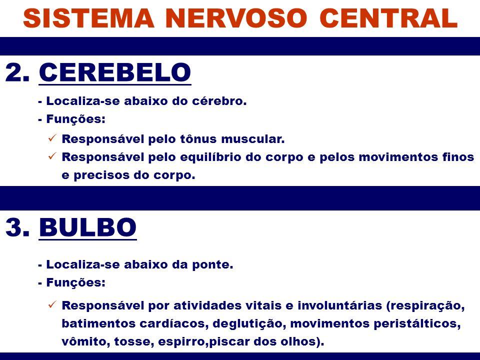 SISTEMA NERVOSO CENTRAL 2. CEREBELO - Localiza-se abaixo do cérebro. - Funções: Responsável pelo tônus muscular. Responsável pelo equilíbrio do corpo