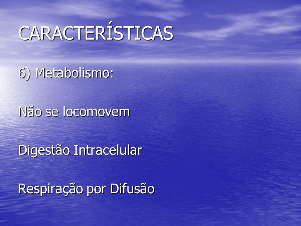 CARACTERÍSTICAS 6) Metabolismo: Não se locomovem Digestão Intracelular Respiração por Difusão