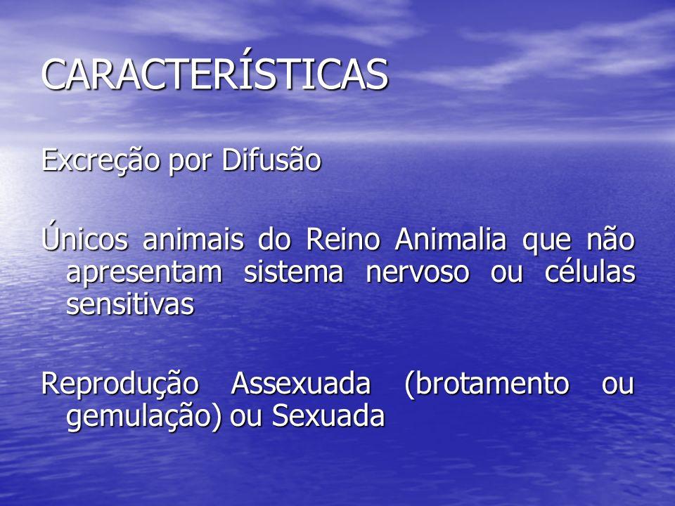 CARACTERÍSTICAS Excreção por Difusão Únicos animais do Reino Animalia que não apresentam sistema nervoso ou células sensitivas Reprodução Assexuada (b