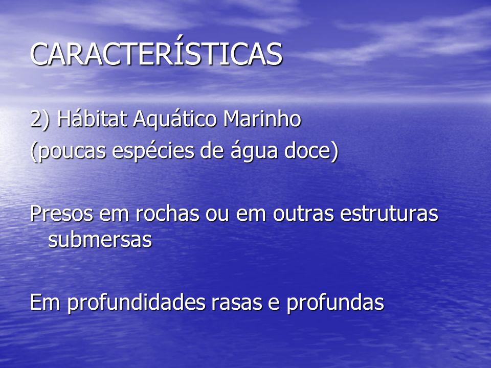 CARACTERÍSTICAS 2) Hábitat Aquático Marinho (poucas espécies de água doce) Presos em rochas ou em outras estruturas submersas Em profundidades rasas e