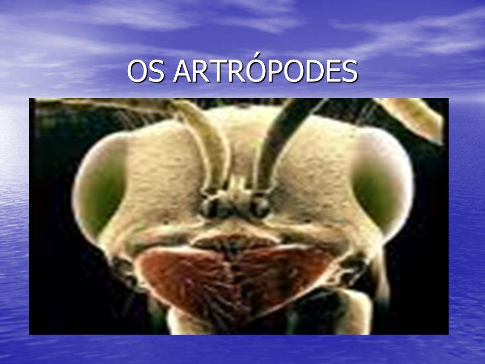 TÓRAX Os insetos com asas são os únicos invertebrados que voam; Os insetos com asas são os únicos invertebrados que voam; Possuem um ou dois pares de asas que saem do tórax (para a fuga, o acasalamento e a busca de alimentos); Possuem um ou dois pares de asas que saem do tórax (para a fuga, o acasalamento e a busca de alimentos); Alguns não possuem asas como as pulgas e as formigas; Alguns não possuem asas como as pulgas e as formigas;