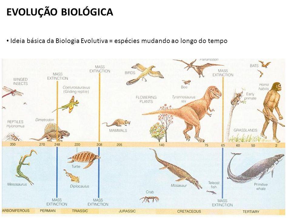 EVOLUÇÃO BIOLÓGICA Ideia básica da Biologia Evolutiva = espécies mudando ao longo do tempo
