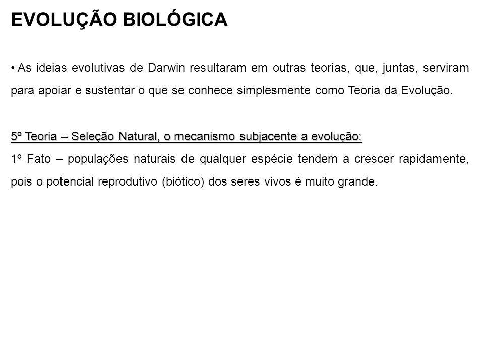 EVOLUÇÃO BIOLÓGICA As ideias evolutivas de Darwin resultaram em outras teorias, que, juntas, serviram para apoiar e sustentar o que se conhece simples