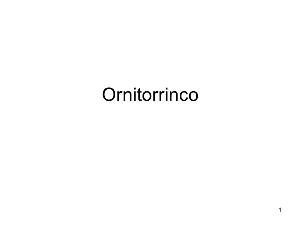 1 Ornitorrinco