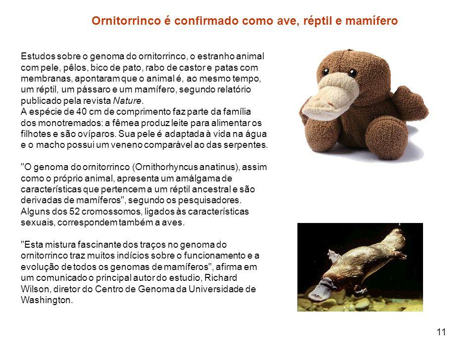 11 Ornitorrinco é confirmado como ave, réptil e mamífero Estudos sobre o genoma do ornitorrinco, o estranho animal com pele, pêlos, bico de pato, rabo