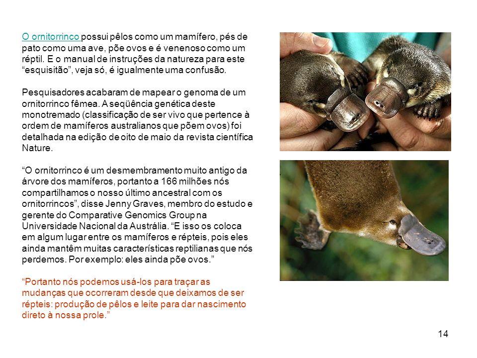 14 O ornitorrinco O ornitorrinco possui pêlos como um mamífero, pés de pato como uma ave, põe ovos e é venenoso como um réptil. E o manual de instruçõ