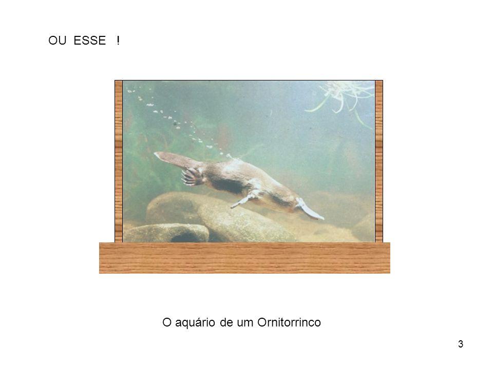 3 OU ESSE ! O aquário de um Ornitorrinco