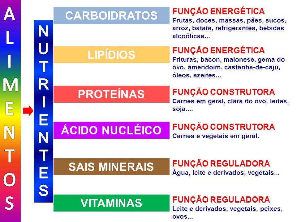 FUNÇÃO REGULADORA Leite e derivados, vegetais, peixes, ovos... FUNÇÃO REGULADORA Água, leite e derivados, vegetais... FUNÇÃO CONSTRUTORA Carnes e vege