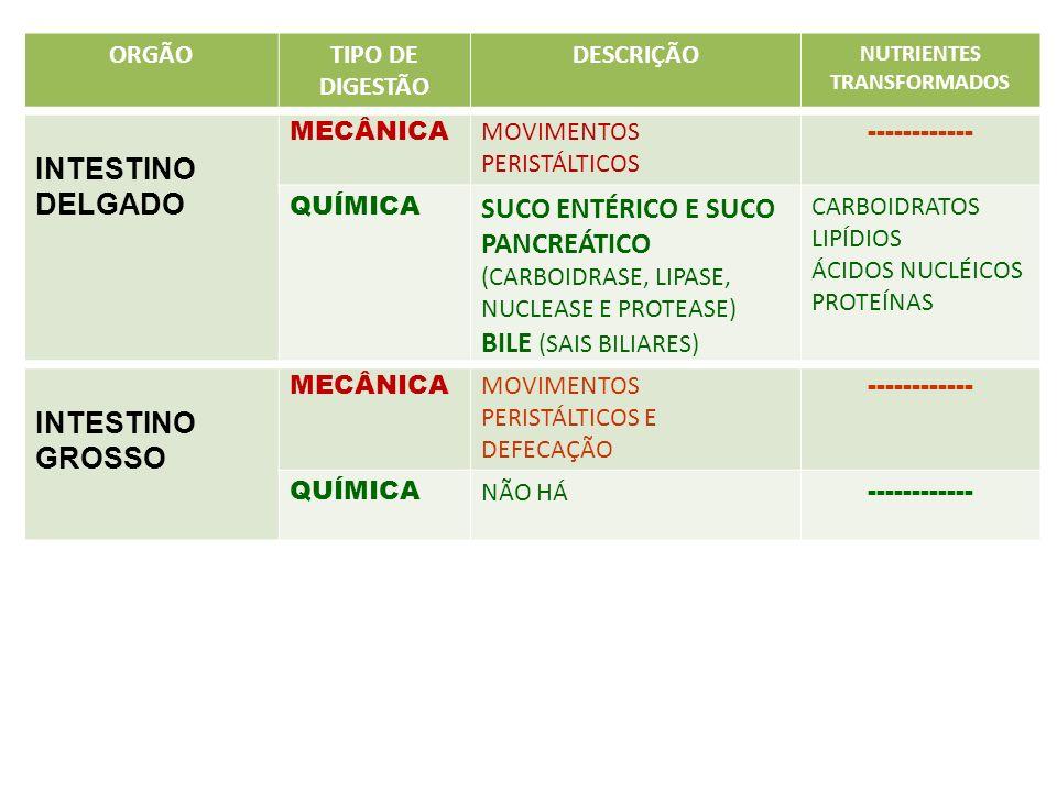 ORGÃOTIPO DE DIGESTÃO DESCRIÇÃO NUTRIENTES TRANSFORMADOS INTESTINO DELGADO MECÂNICA MOVIMENTOS PERISTÁLTICOS ------------ QUÍMICA SUCO ENTÉRICO E SUCO
