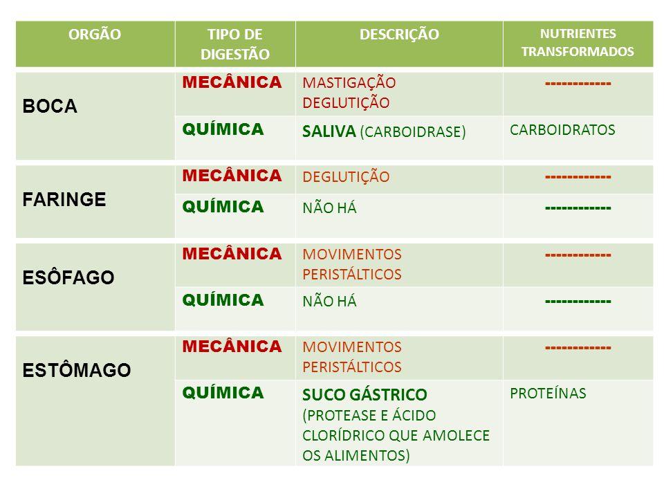 ORGÃOTIPO DE DIGESTÃO DESCRIÇÃO NUTRIENTES TRANSFORMADOS BOCA MECÂNICA MASTIGAÇÃO DEGLUTIÇÃO ------------ QUÍMICA SALIVA (CARBOIDRASE) CARBOIDRATOS FA