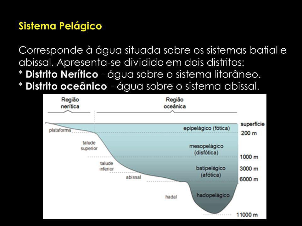 Sistema Pelágico Corresponde à água situada sobre os sistemas batial e abissal.