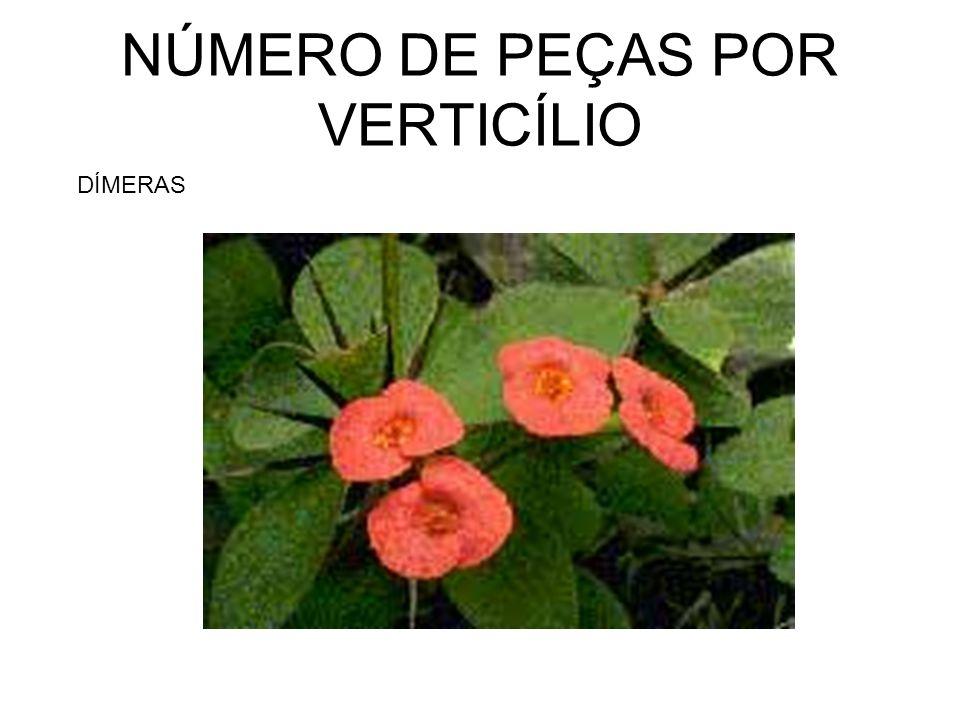 NÚMERO DE PEÇAS POR VERTICÍLIO DÍMERAS