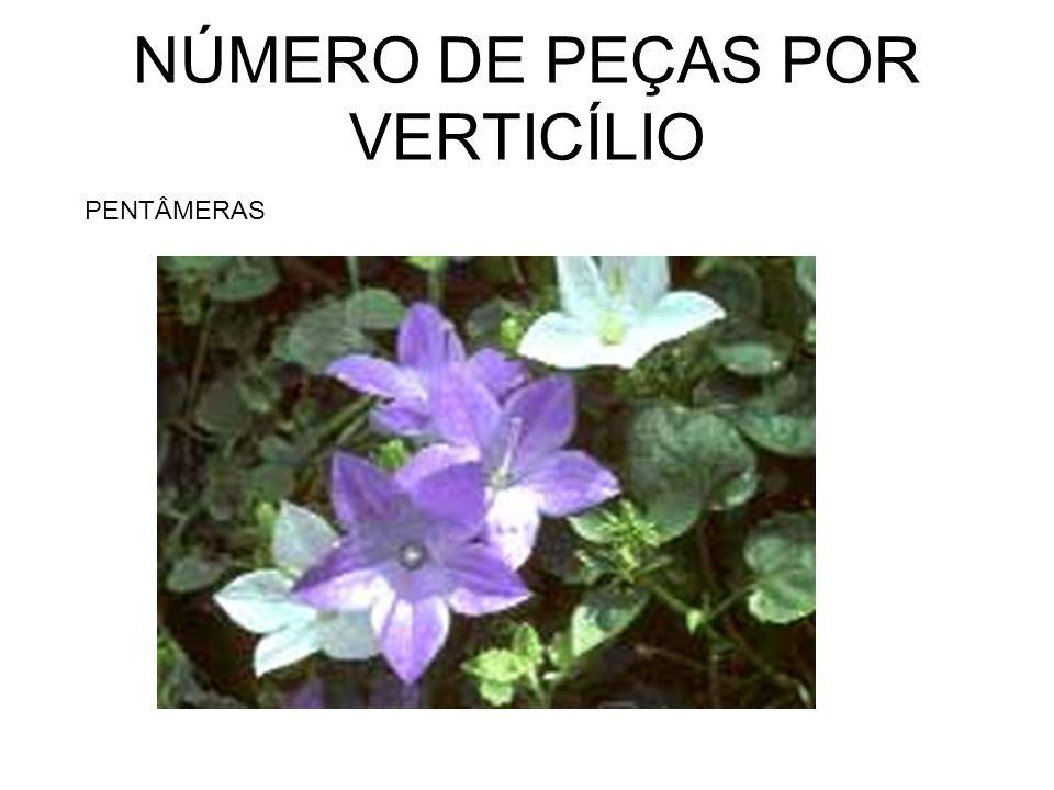 NÚMERO DE PEÇAS POR VERTICÍLIO PENTÂMERAS