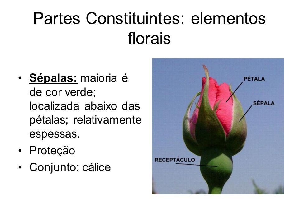 Partes Constituintes: elementos florais Sépalas: maioria é de cor verde; localizada abaixo das pétalas; relativamente espessas. Proteção Conjunto: cál