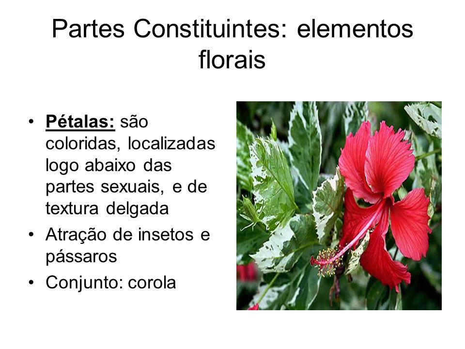 Partes Constituintes: elementos florais Pétalas: são coloridas, localizadas logo abaixo das partes sexuais, e de textura delgada Atração de insetos e