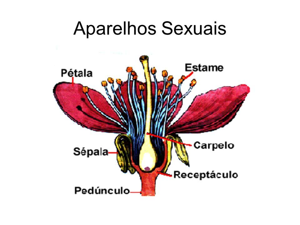 Aparelhos Sexuais
