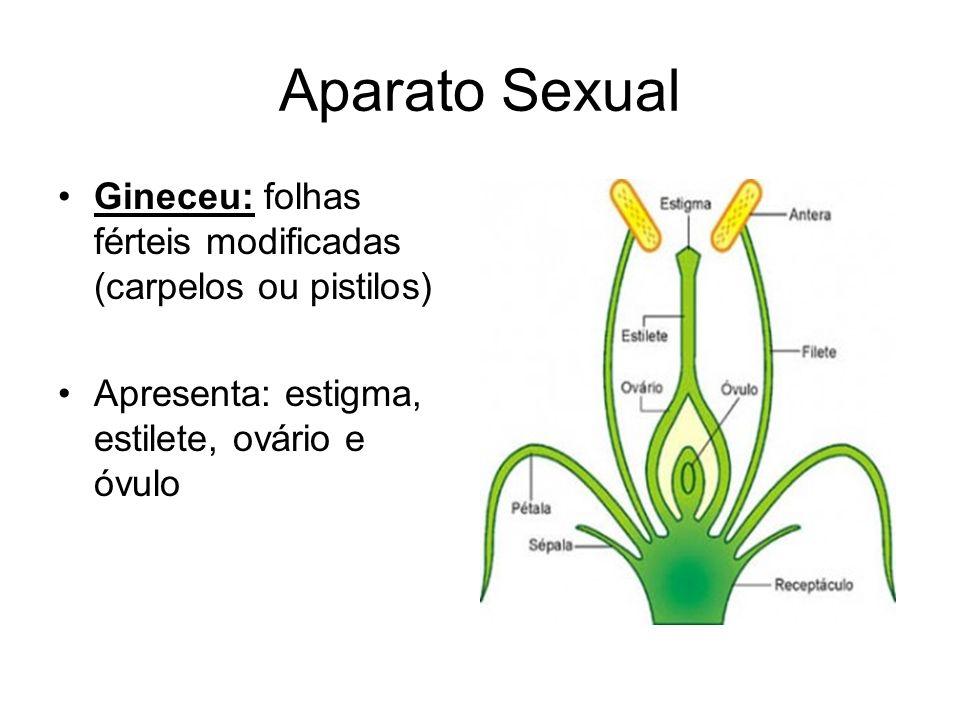 Aparato Sexual Gineceu: folhas férteis modificadas (carpelos ou pistilos) Apresenta: estigma, estilete, ovário e óvulo