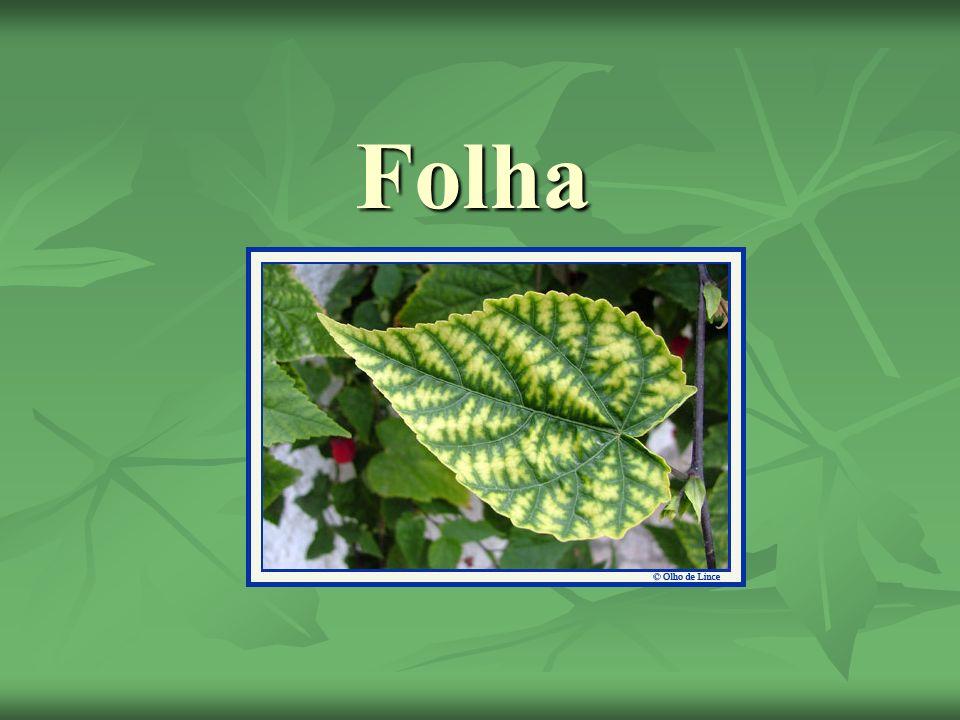 Gavinhas São pequenas folhas que servem para fixar o vegetal; São pequenas folhas que servem para fixar o vegetal;