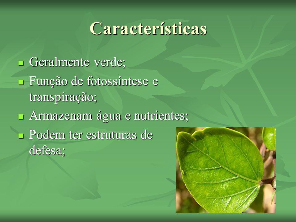 Características Geralmente verde; Geralmente verde; Função de fotossíntese e transpiração; Função de fotossíntese e transpiração; Armazenam água e nut