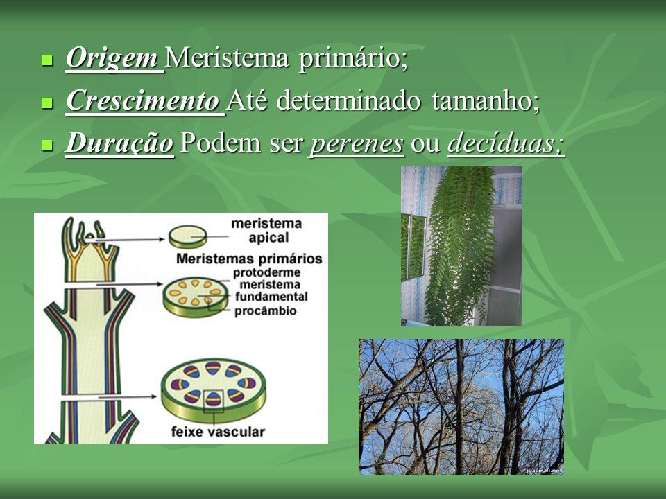 Origem Meristema primário; Origem Meristema primário; Crescimento Até determinado tamanho; Crescimento Até determinado tamanho; Duração Podem ser pere