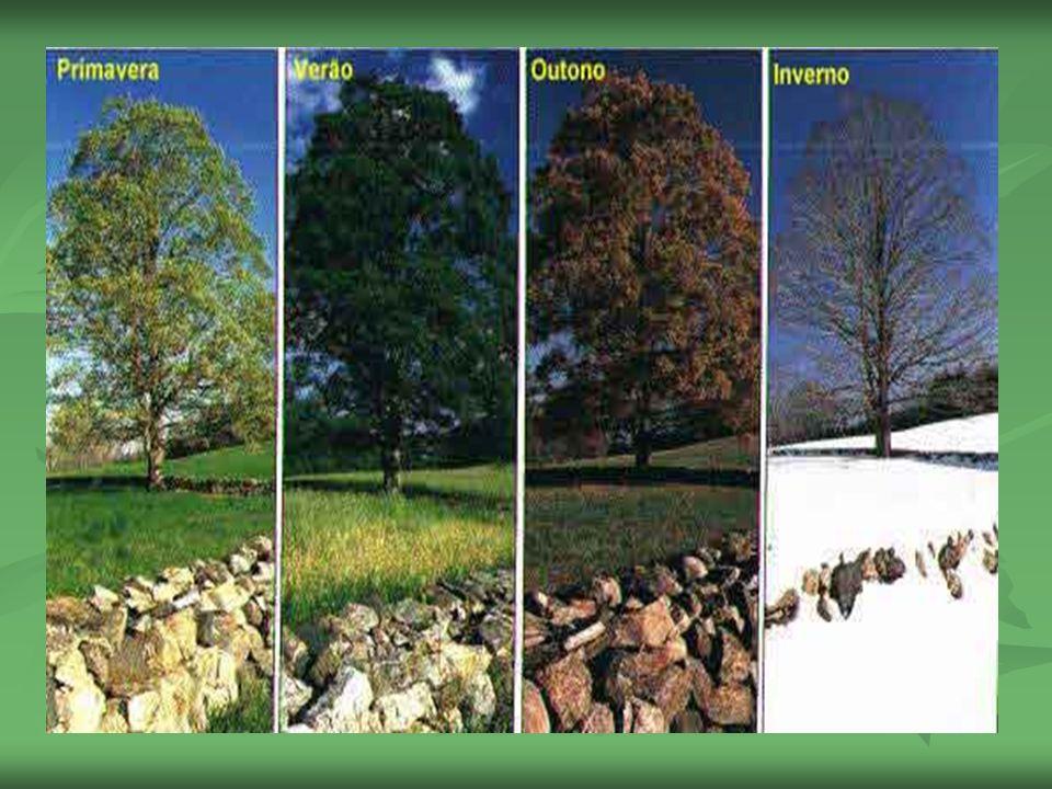 Espatas São folhas que protegem a inflorescência; São folhas que protegem a inflorescência;