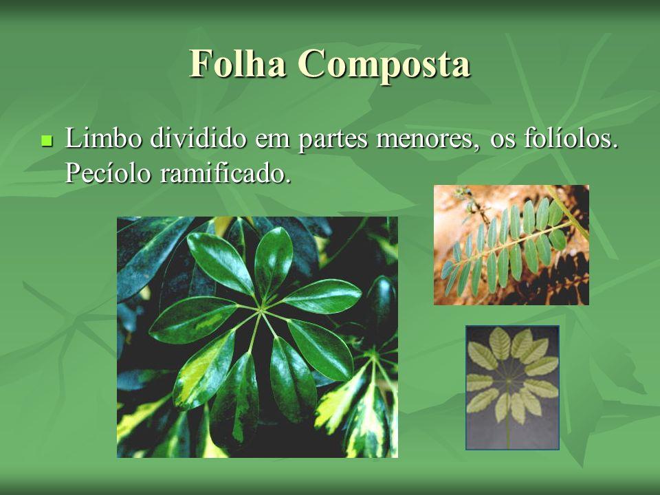 Variações Heterofilia- Algumas folhas são diferentes das outras; Heterofilia- Algumas folhas são diferentes das outras;