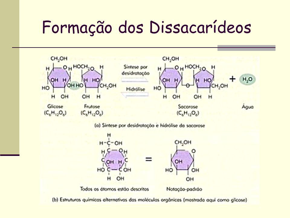 Funções dos Carboidratos Fonte de Energia; Estrutural; Reserva Energética. Respiração celular